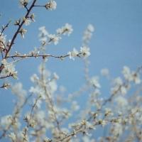 O jarných kvetoch sa dá veľa rozprávať