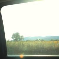 Slnečnice za oknami