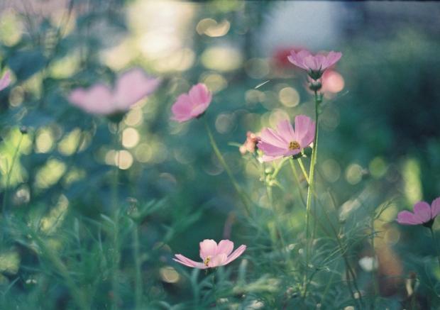 letne_kvety