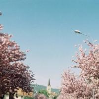 Jar na Fraňa Mojtu
