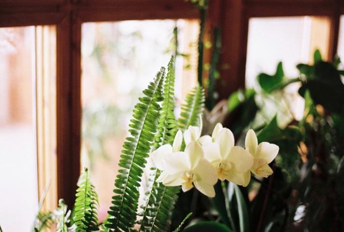 orchideaa