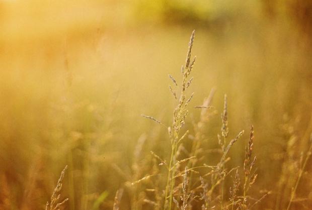 trava_slnko
