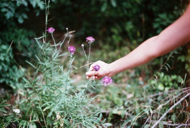 lesne_kvety
