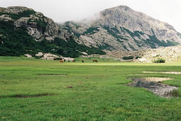 lac_de_nino_grass