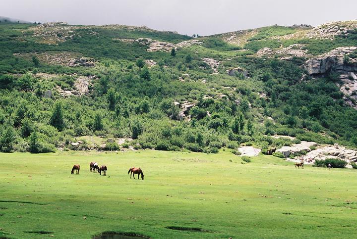 lac_de_nino_horse