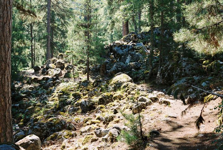 lesny_chodnik