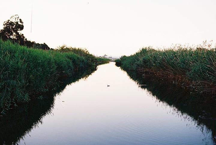 river_duck