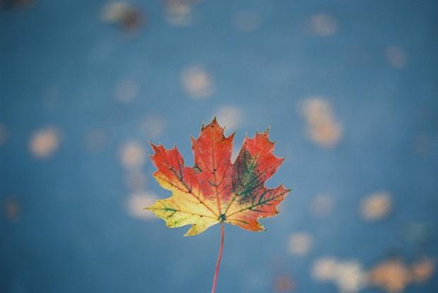 jesenny_list