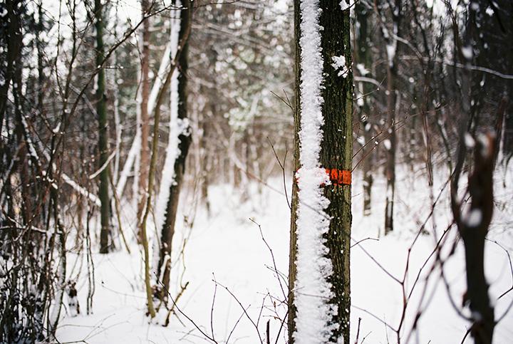 lesny-chodnik-v-zime