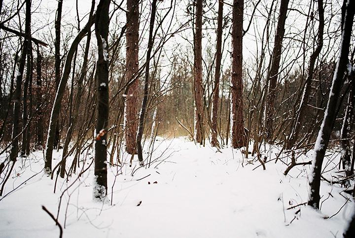 zasnezeny-lesny-chodnik