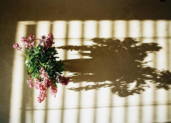 jarne-kvety-tiene