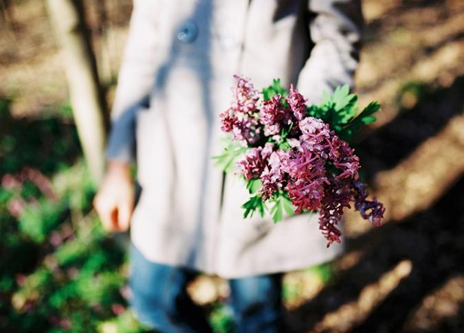 kyticka_fialovych_kvetov