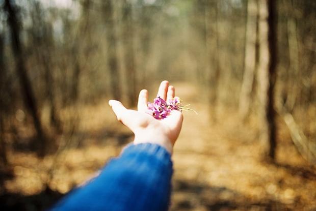fialky_v_lese
