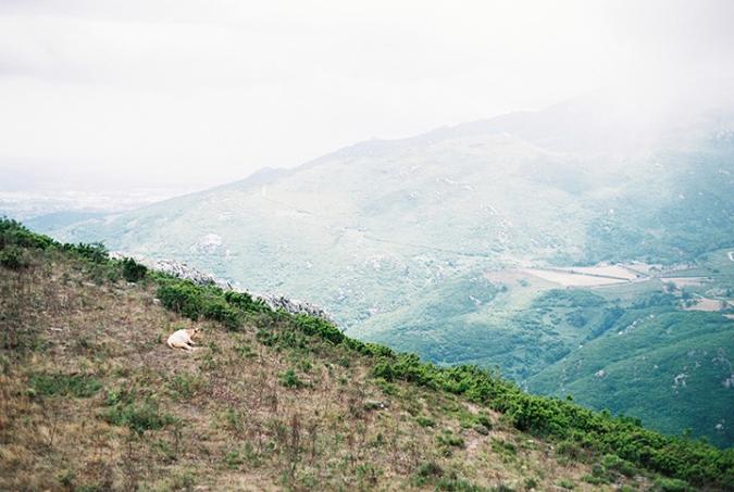 krava-na-vrchu-hory