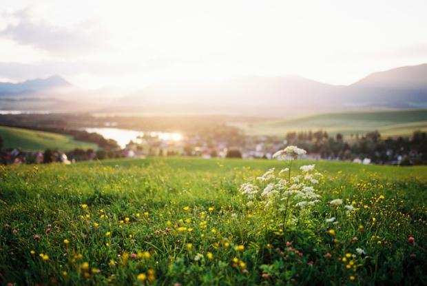 lucne-kvety-liptova