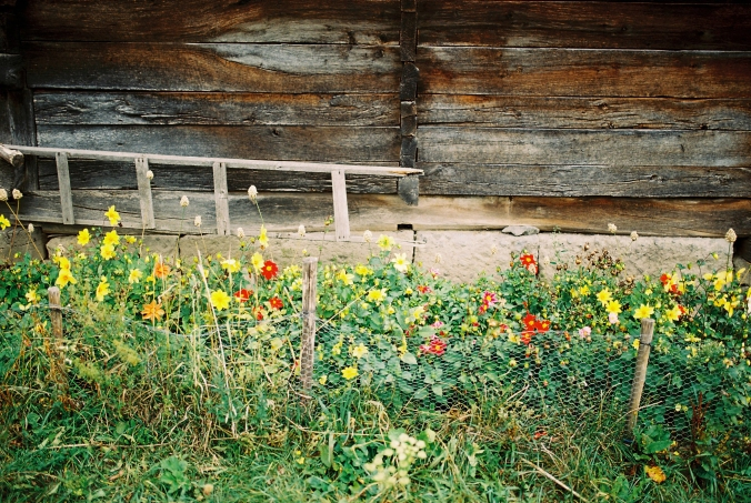 farebne-kvety