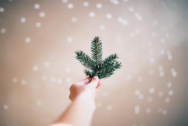 haluzka-vianoce