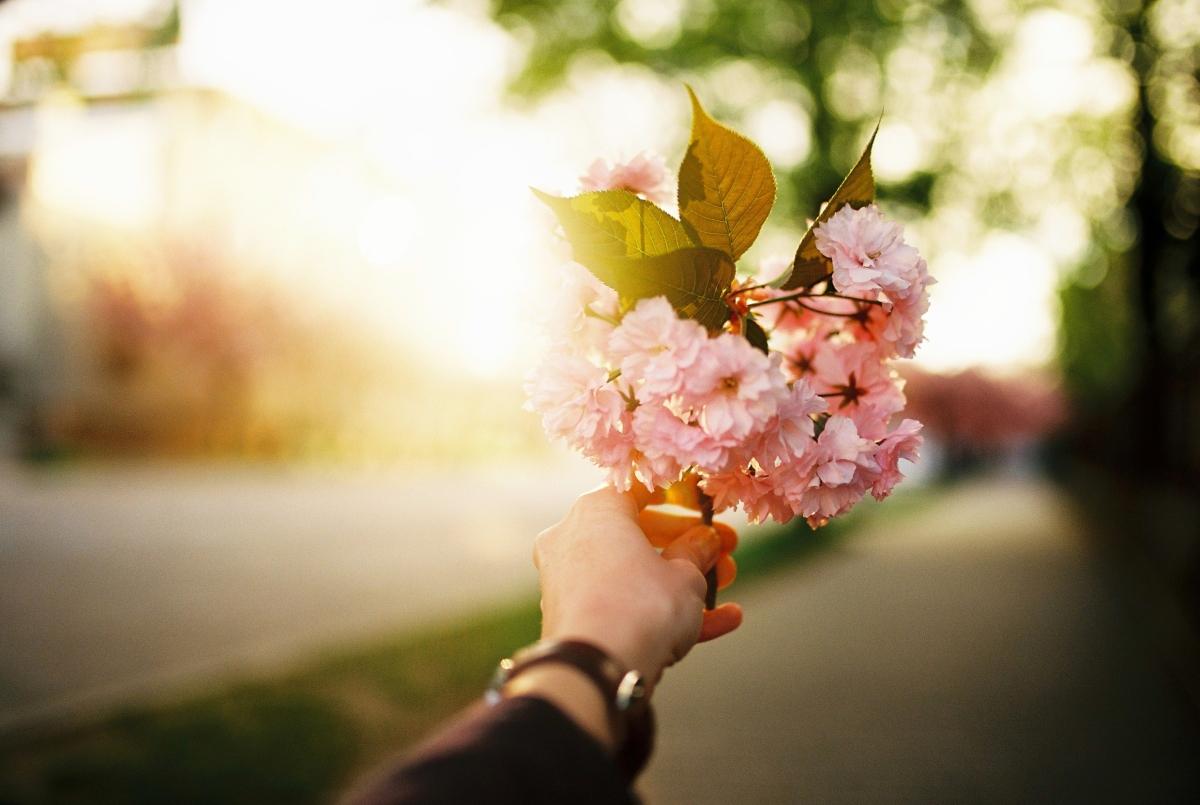 Kvitnúce sakury na Fraňa Mojtu