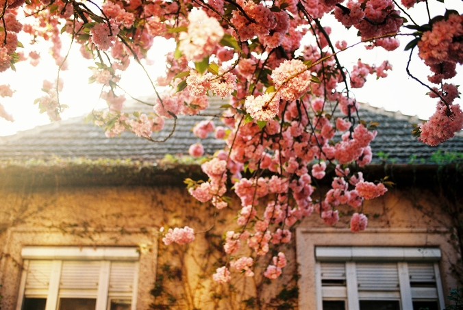 domy-pod-sakurami