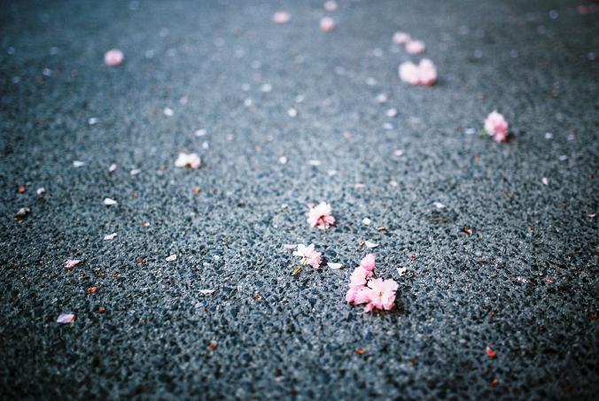 lupene-na-ceste
