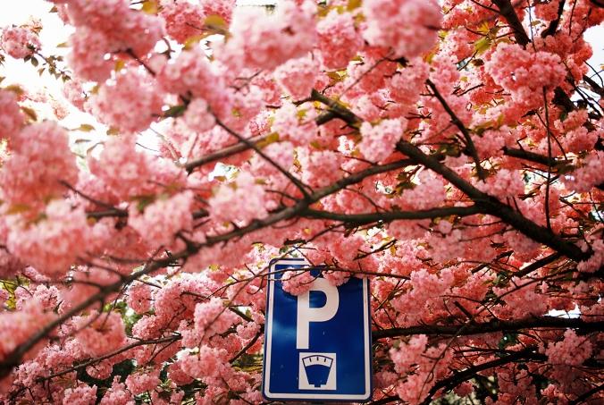 parkovanie-frana-mojtu