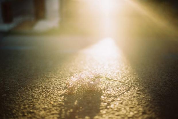 vychod-slnka-frana-mojtu-nitra