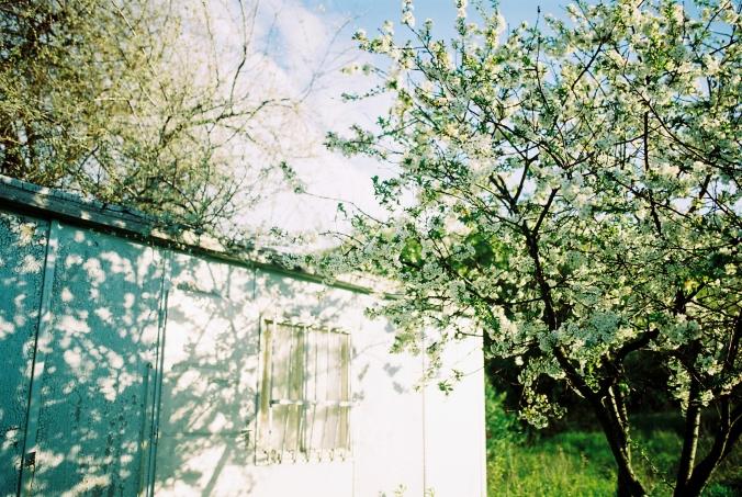 jarne-kvety-kvitnu
