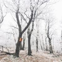 V mrazivom lese