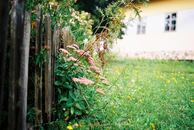 kvety-v-plote