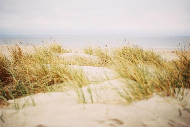 20-grass-beach-hel