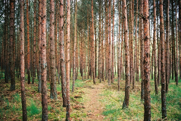 25-forest-wisla