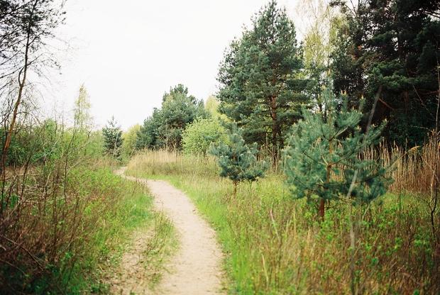 26-rezerwat-przyrody-mewia-lacha-forest