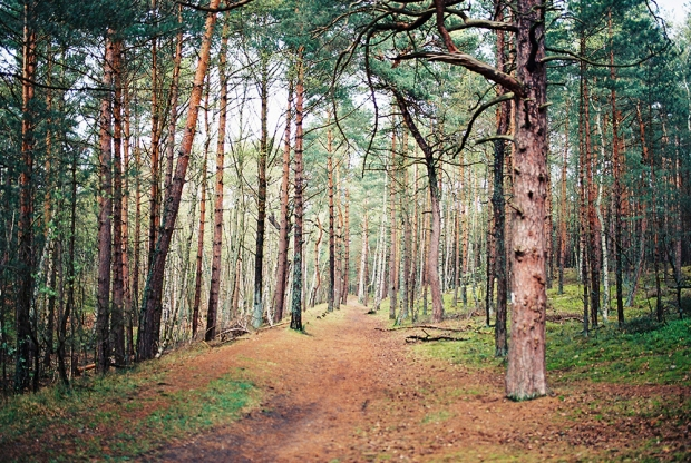 5-hel-forest