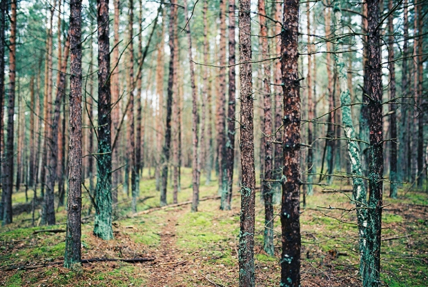 6-hel-poland-forest