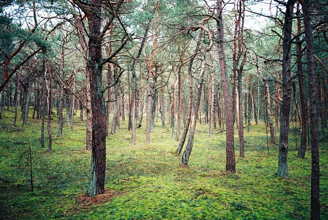 7-hel-forest